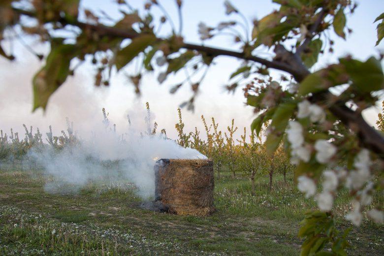 A gyümölcsösökben és a szőlőskertekben is védekeznek a mínuszok ellen a gazdák